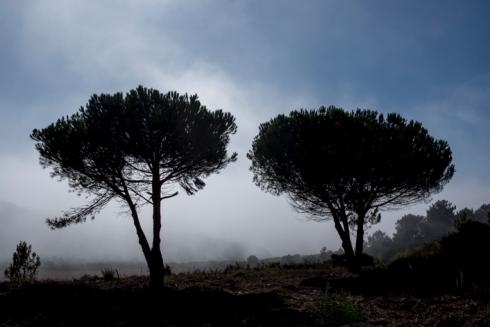 Bomen bij opkomende mist